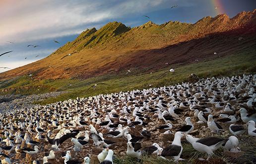 Epske selitve ptic