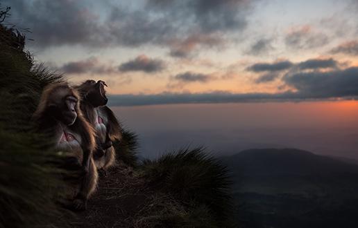 Etiopske dželade