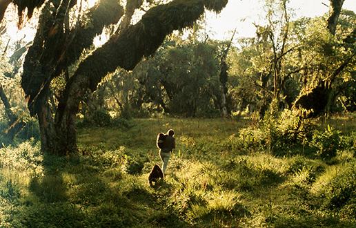 Gorile Dian Fossey
