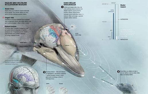 razumevanje delfinov