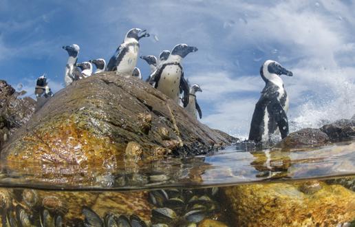 JAR pingvini.jpg