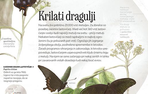 Lovci na metulje