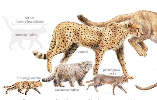 Male mačke