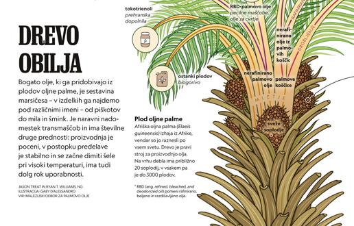Palmovo olje