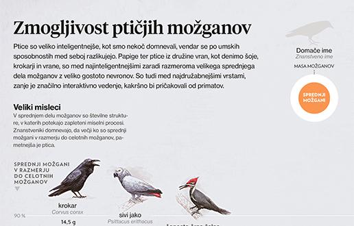 Ptice so glavice