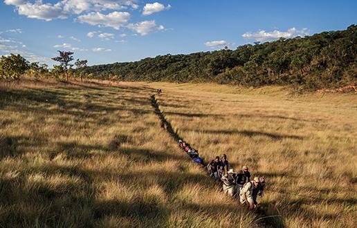 V Okavangovi delti