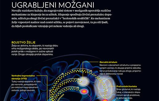 Zasvojeni možgani