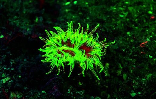 Biofluorescenca_2.jpg