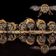 Čebelje skrivnosti