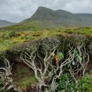 Drevo na koncu sveta